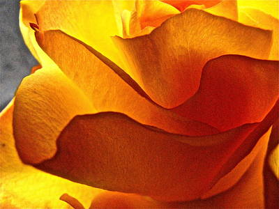 Art Print featuring the photograph Yellow Rose In The Sun by Lori Miller