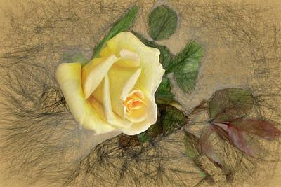 Photograph - Yellow Rose by John Freidenberg