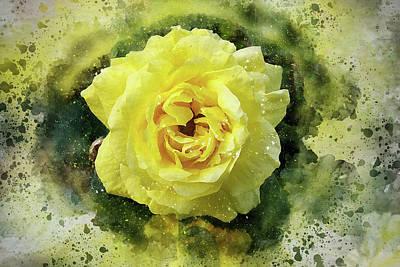 Photograph - Yellow Rose by Judi Saunders