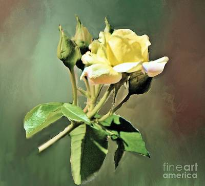 Photograph - Yellow Rose Late Bloomer by Janette Boyd
