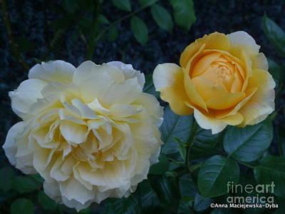 Folkartanna Photograph - Yellow Rose Midas Gold by Anna Folkartanna Maciejewska-Dyba