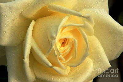 Art Print featuring the photograph Yellow Rose by Nicola Fiscarelli