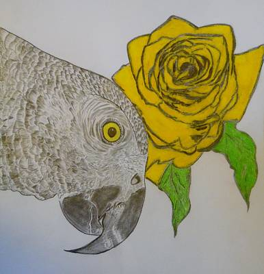 Drawing - Yellow Rose by Nicole Burrell