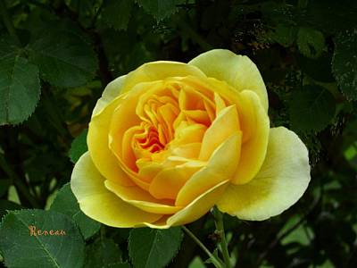 Photograph - Yellow Rose Of Tacoma by Sadie Reneau