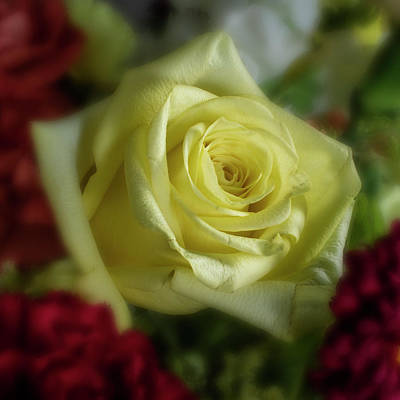 Photograph - Yellow Rose Of Texas by Garry McMichael