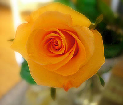 Photograph - Yellow Rose Of Texas by Sandra Selle Rodriguez