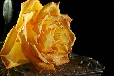 Yellow Rose Art Print by Robert Och