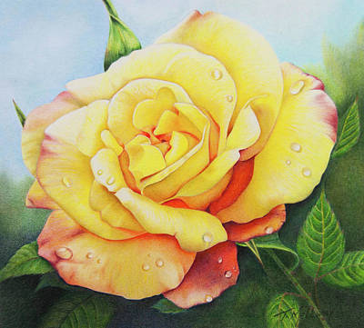 Drawing - Yellow Rose by Terry Mellway
