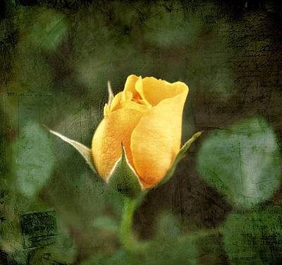 Yellow Rosebud Photograph - Yellow Rosebud by Cathie Tyler