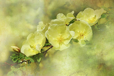 Art Print featuring the photograph Yellow Roses by Elaine Manley