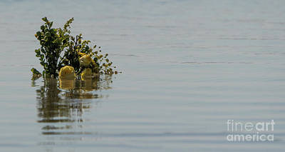 Photograph - Yellow Roses Emerging From The Sea by Vincent Billotto