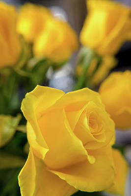 Photograph - Yellow Roses by Laura Macky