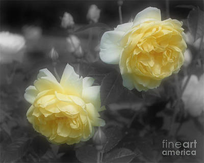 Yellow Roses Partial Color Art Print by Smilin Eyes Treasures