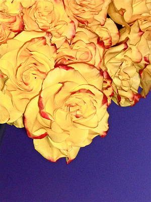 Photograph - Yellow Roses by Yelena Tylkina