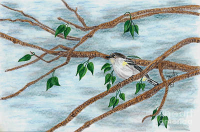 Drawing - Yellow Rumped Warbler by Terri Mills