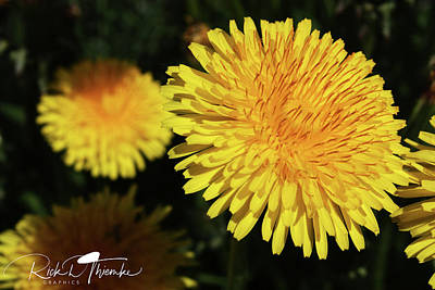 Photograph - Yellow Scurge by Rick Thiemke