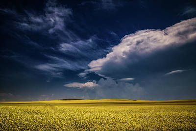 Photograph - Yellow Sea Under The Blue Sky  by Plamen Petkov