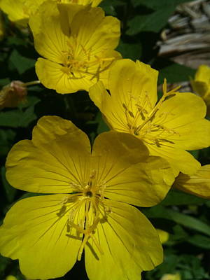 Goonies Photograph - Yellow  Shade by Trish Hale