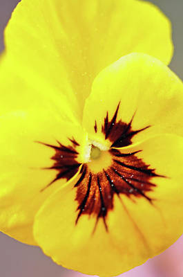 Photograph - Yellow Smile by Glenn Gordon