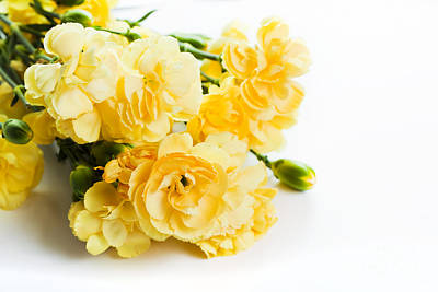 Blossoming Photograph - Yellow Soft Spring Flowers Bouquet On White Background by Michal Bednarek
