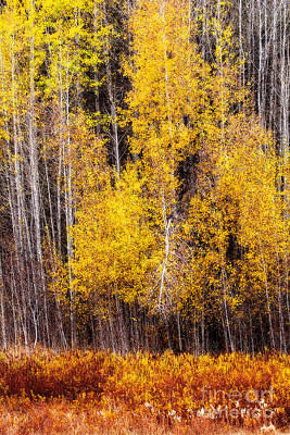 Photograph - Yellow by Sonya Lang