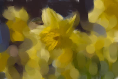 Photograph - Yellow Spring Artistic  by Leif Sohlman