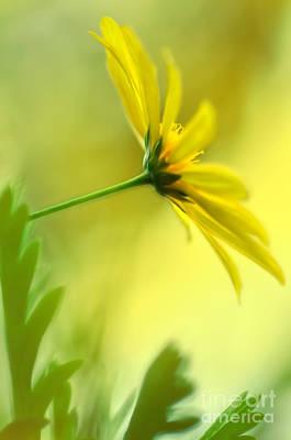 Yellow Spring Daisy Abstract By Kaye Menner Art Print by Kaye Menner