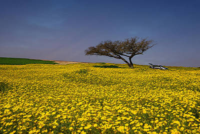 Photograph - Yellow Spring by Uri Baruch