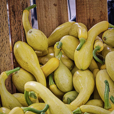 Photograph - Yellow Squash by Randy Bayne