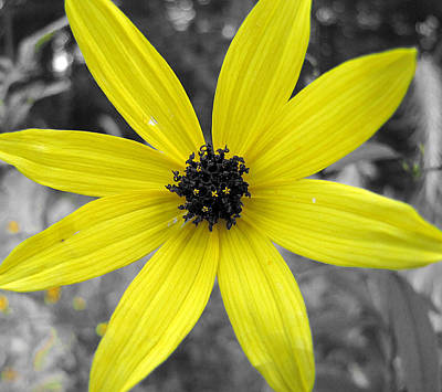 Photograph - Yellow Stands Out by Scott Hovind