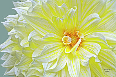 Photograph - Yellow Striped Dahlia by Peg Runyan