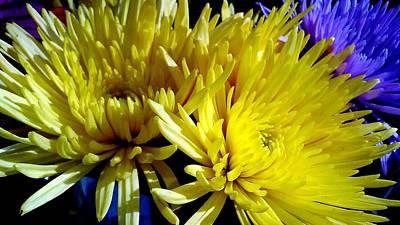Photograph - Yellow Summer Chrysanthemum by Michael Hoard