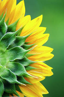 Floral Photograph - Yellow Sunflower by Christina Rollo