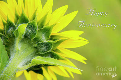 Photograph - Yellow Sunflower Happy Anniversary by Alana Ranney