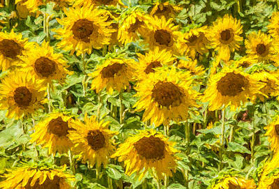 Western Art - Yellow Sunflowers by David Letts