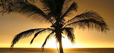 Photograph - Yellow Sunset Palm Maui Hawaii by Pierre Leclerc Photography
