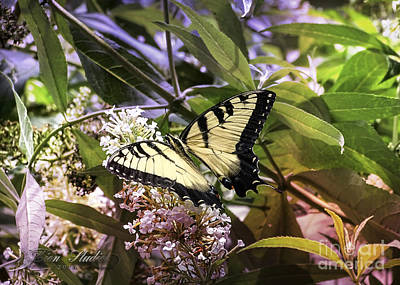 Photograph - Yellow Swallowtail Butterfly by Melissa Messick