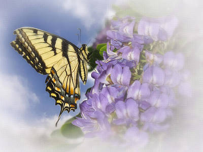 Mountain Laurel Photograph - Yellow Swallowtail Butterfly On Mountain Laurel by David and Carol Kelly