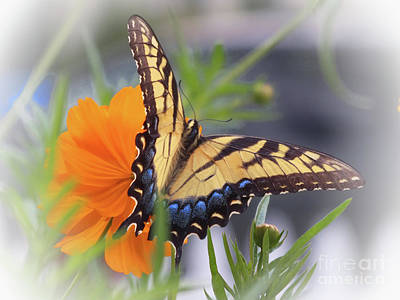 Photograph - Yellow Swallowtail Butterfly by Scott Cameron