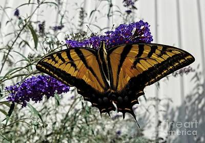 Photograph - Yellow Swallowtail by Jon Burch Photography