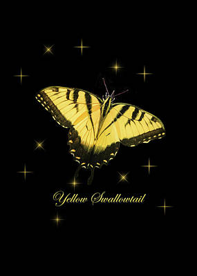 Photograph - Yellow Swallowtail On Black by Joni Eskridge