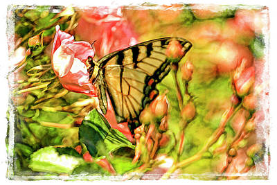 Yellow Swallowtail On Rose Bud Art Print