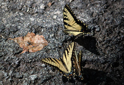 Yellow Swallowtails II Original by Suzanne Gaff