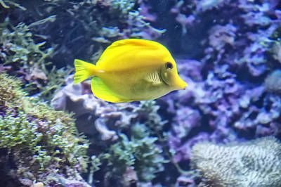 Digital Art - Yellow Tang by Chris Flees