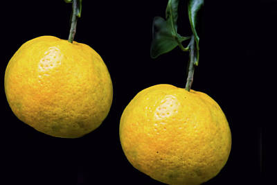 Photograph - Yellow Tangerines by Steven Parker