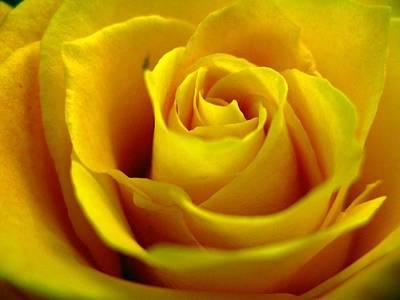 Photograph - Yellow Tea by Rhonda Barrett