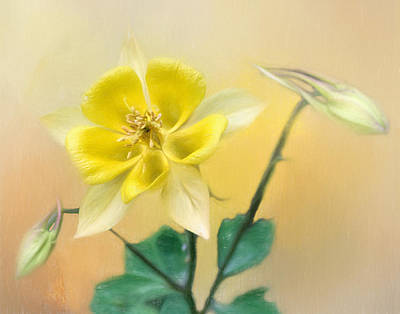Photograph - Yellow Texas Columbine by David and Carol Kelly