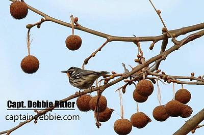 Photograph - Yellow-throated Warbler 0422 by Captain Debbie Ritter
