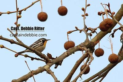 Photograph - Yellow-throated Warbler 0432 by Captain Debbie Ritter
