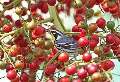 Yellow-throated Warbler Art Print